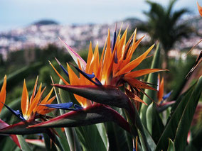 MAG Lifestyle Magazin Reisen Urlaub Madeira Blumeninsel Hotels Luxus Luxushotels Funchal Calheta