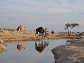 MAG Lifestyle Magazin Reisen Urlaub Fernreisen  AlUla Hegra Saudi-Arabien UNESCO-Weltkulturerbestätte Abenteuerurlaub Kultur