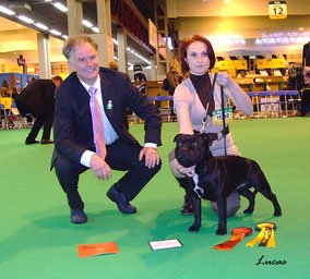Staffmate Noble Ambassador zoon Diesel Wizard Bull (Cz) wint RCC op Crufts
