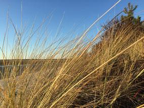 Dunes-baie-de-somme