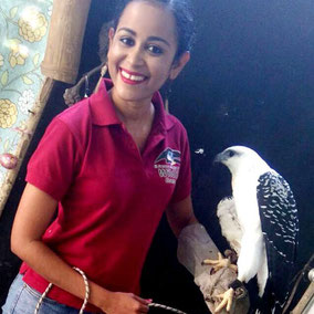 White hawk. Animal ambassador. Environmental education and awareness. Volunteer. Trinidad.