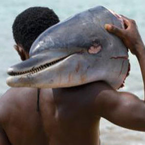 Bush meat. Hunting. Dolphin. Food. Native.