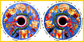 Mapa Iridología relación ojos con órganos Herbolario Alquimista Arrecife Lanzarote