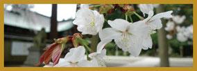 四季の風景:剣神社