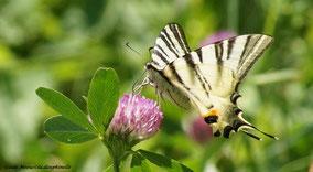 Le papillon qui volait à l'envers