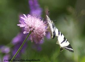 Un bien étrange papillon