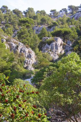 Bild: Abstieg in die Calanque d´en Vau