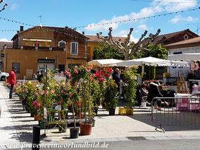 Bild: Blumen- und Pflanzenmarkt in Oppéde