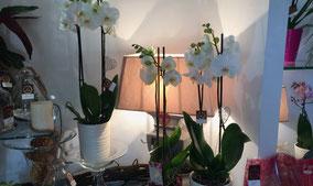 interflora-livraison-bouquets-fleuris-florajet-partout-en france