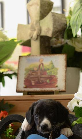 pompes-funebres-marbrerie-orange-chenes-verts-coudoulet-chambre-funeraire-crematorium