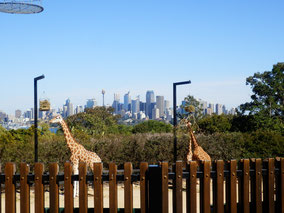 Sydney タロンガ動物園