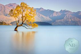 Langzeitaufnahme des Wanaka Tree am Lake Wanaka in Neuseeland