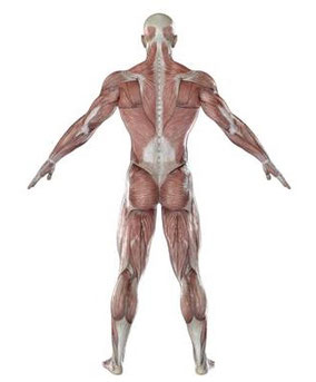 揉んでも良くならない肩こりは、肩以外に原因があることが多い!
