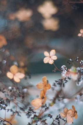 fleursuspednuequisereflètedansleau