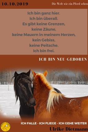 Tierkommunikation Kurse