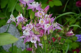 Jungpflanzen biologisch umweltverträglich regional umweltschonend Hausgarten Gemüsekiste Ab Hof Direktvermarkter regional
