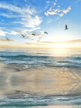 Meeresufer mit fliegenden Möwen