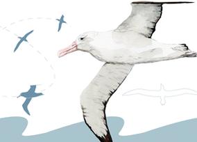 Der Weg der Vögel