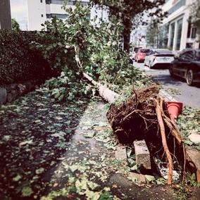 台風後の道写真