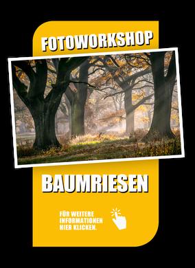 Link zur Foto-Reise Baumriese im Auenwald