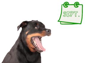 Der nachhaltige Hundekalender September