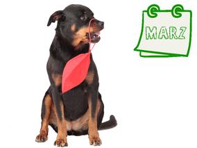 Der nachhaltige Hundekalender März