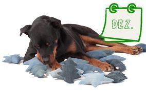 Grüner Online-Kalender für Hundebesitzer Dezember