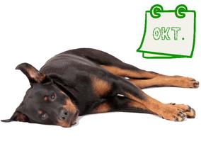Der nachhaltige Hundekalender Oktober