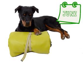 Der nachhaltige Hundekalender Juni