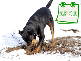 Der nachhaltige Hundekalender April