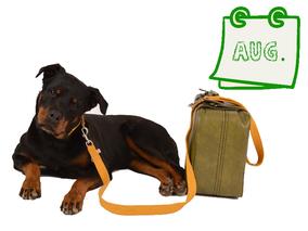 Der nachhaltige Hundekalender August - Shila mit Gurtband-Leine und Kunstleder-Koffer