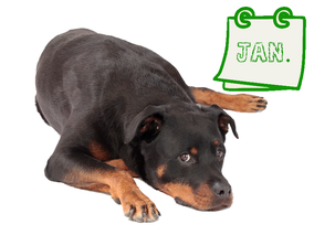 Der grüne Hundekalender - Januar