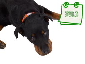 Der nachhaltige Hundekalender Juli