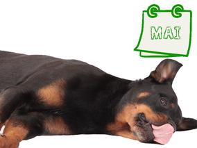 Der nachhaltige Kalender für Hundehalter Mai