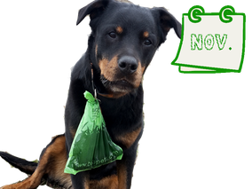 Der nachhaltige Hundekalender November