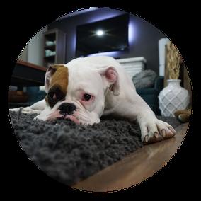 mobile Tierbetreuung, Katzenbetreuung, Gassi-Service Hund, Spaziergang Hund, Urlaub ohne Tier, Tiere zu Hause
