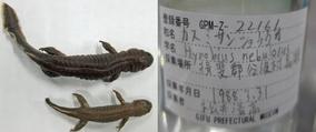 図12-2 揖斐川町標本
