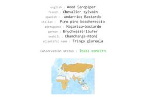 wood sandpipier, chevalier sylvain, andarrios bastardo, Tringa glareola, birds of kenya, birds of africa, Nicolas Urlacher, wildlife of kenya