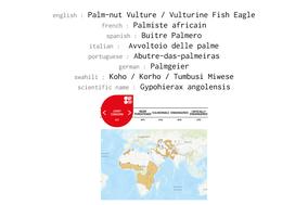 Gypohierax angolensis, palm-nut vulture, palmiste africain, buitre palmero, birds of prey of kenya, widllife of kenya, vultures of kenya