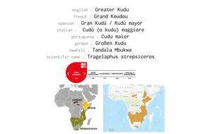 Distribution of Greater Kudu