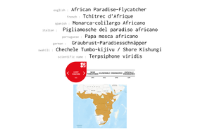 distribution of african paradise flycatcher
