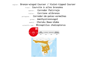 distribution of bronze-winged courser