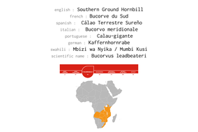 Distribution of Southern Ground Hornbill