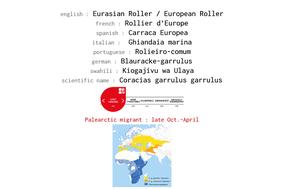 distribution of eurasian roller