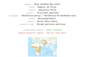 Merops persicus persicus, blue-cheeked bee-eater, guepier de Perse, abejaruco persa, birds of kenya, birds of africa, wildlife of kenya, Nicolas Urlacher