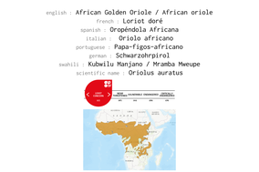 distribution of african golden oriole