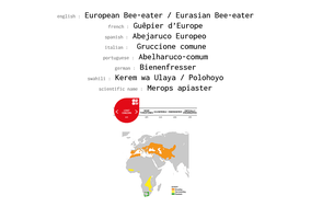 distribution of eurasian bee-eater