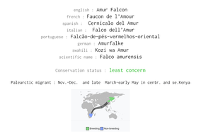 Amur falcon, Falco amurensis, Amurfalke, Cernícalo del Amur, faucon de l'Amour, birds of kenya, birds of africa, migrant birds, migrants, Nicolas Urlacher, wildlife of kenya, raptors, raptors of kenya