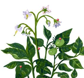 budowa rośliny