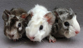 Moritz, Milky und Max